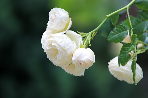 Mit Trauer umgehen – das kann dir helfen